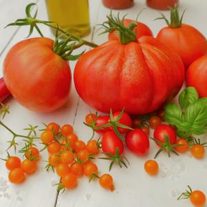 leckere Tomaten